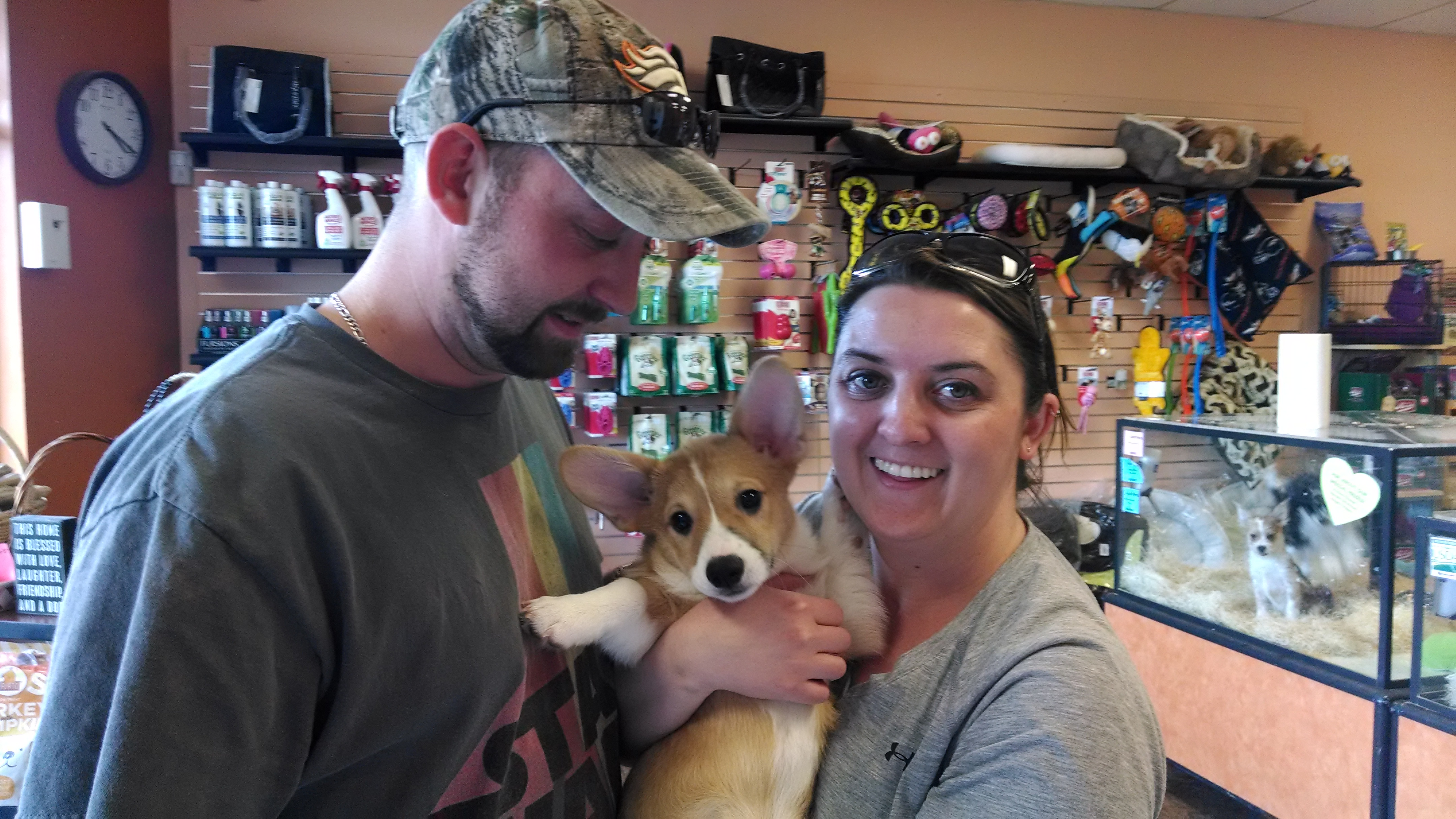 Pet   Pet Stores in Colorado   Dogs For Sale in Colorado   Just Pets